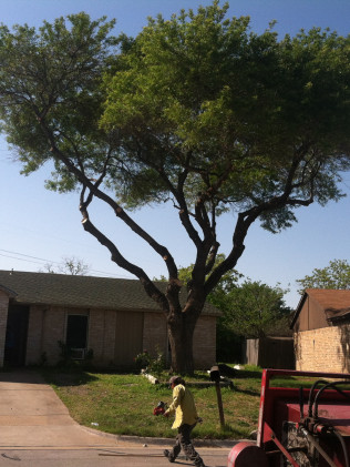 Tree Care & Pruning