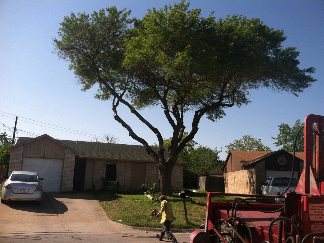Disheveled trees make your property look less than stellar