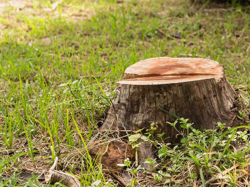 Benefit big from complete stump removal