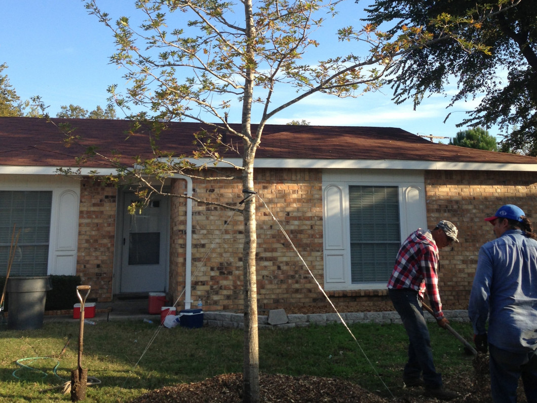 Improve your property's appearance with beautiful trees